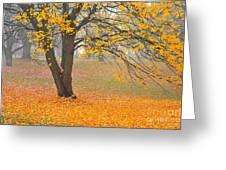 Autumn Fallen Greeting Card by Terri Gostola