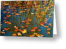 Autumn  Floating Greeting Card by Peggy  Franz