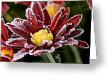 Autumn Frost Greeting Card by Tiffany Erdman