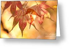 Autumn Glow Greeting Card by Anne Gilbert