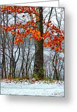 Autumn In Winter Greeting Card by Julie Dant