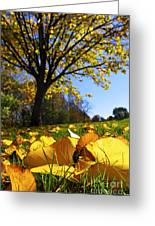 Autumn Landscape Greeting Card by Elena Elisseeva
