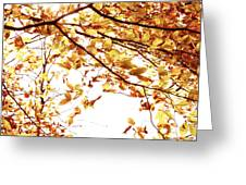 Autumn Leaves Greeting Card by Blink Images