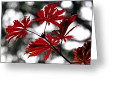 Autumn Leaves Greeting Card by JianGang Wang