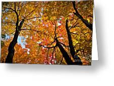 Autumn Maple Trees Greeting Card by Elena Elisseeva
