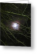 Autumn Moon Peeks Through The Branches Greeting Card by Guy Ricketts