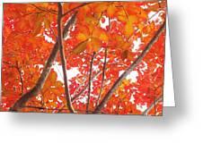 Autumn Orange Greeting Card by Scott Cameron