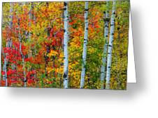 Autumn Palette Greeting Card by Mary Amerman