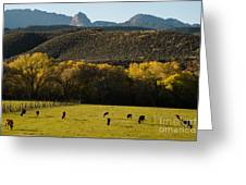 Autumn Pastures Along The Virgin River Rockville Utah Greeting Card by Robert Ford