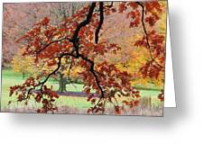 Autumn Rainbow Greeting Card by TODD SHERLOCK