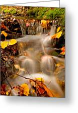 Autumn Stream 8227 Greeting Card by Brent L Ander
