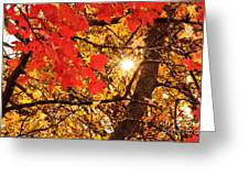 Autumn Sunrise Painterly Greeting Card by Andee Design