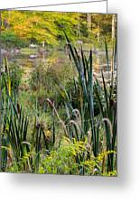 Autumn Swamp Greeting Card by Bill Wakeley