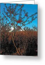Autumn Greeting Card by Terry Reynoldson