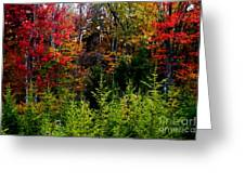 Autumn Tree Foliage Greeting Card by Lanjee Chee