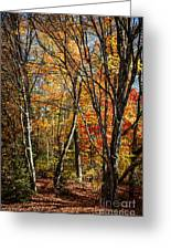 Autumn Trees Greeting Card by Elena Elisseeva