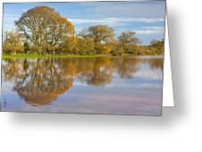 Autumn Trees Greeting Card by Sebastian Wasek