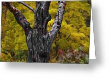 Autumn trees3 Greeting Card by Vladimir Kholostykh
