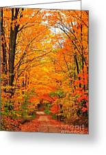 Autumn Tunnel Of Trees Greeting Card by Terri Gostola