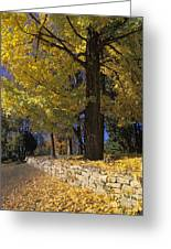 Autumn Wall - Fm000082 Greeting Card by Daniel Dempster