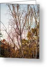 Autumn Wilt Greeting Card by Mike Lee