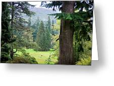 Autumnal Trees In Benmore Botanical Garden. Scotland Greeting Card by Jenny Rainbow