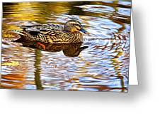 Autumns Brilliance Greeting Card by Frozen in Time Fine Art Photography