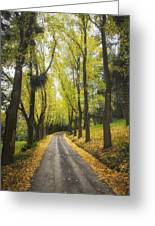 Autumns Day Greeting Card by Kim Andelkovic