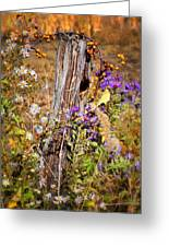Autumns Flowers Greeting Card by Thomas Schoeller