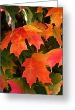 Autumn's Peak Greeting Card by Paula Tohline Calhoun