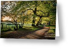 Avenue Of Light Greeting Card by Tim Gainey