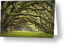 Avenue of Oaks - Charleston SC Plantation Live Oak Trees Forest Landscape Greeting Card by Dave Allen