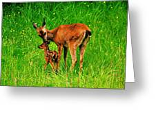 Aww Mom Greeting Card by Benjamin Yeager