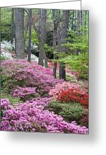 Azaleas Galore Greeting Card by Eggers Photography