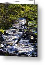 Babbling Brook Greeting Card by Bill Cannon