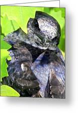 Baby Bluejay Peek Greeting Card by Karen Wiles