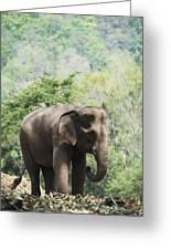 Baby Elephant Chiang Mai, Thailand Greeting Card by Stuart Corlett