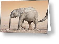 Baby elephant  Greeting Card by Johan Swanepoel