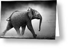 Baby Elephant Running Greeting Card by Johan Swanepoel