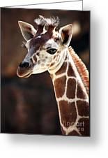 Baby Giraffe Greeting Card by John Rizzuto