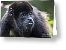 Baby Howler Monkey Greeting Card by Heiko Koehrer-Wagner