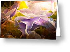 Baby Hydrangeas Greeting Card by Bob Orsillo