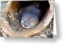 Baby Otter Greeting Card by Mary Deal