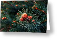 Baby Pinecones Greeting Card by Julie Dant