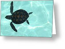 Baby Sea Turtle Greeting Card by Ellen Henneke