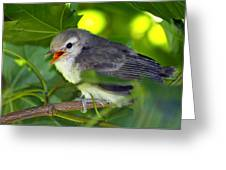 Baby Sparrow In The Maple Tree Greeting Card by Karon Melillo DeVega