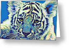 Baby Tiger- Blue Greeting Card by Jane Schnetlage