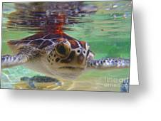 Baby Turtle Greeting Card by Carey Chen