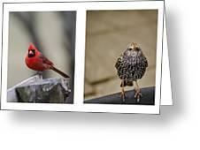 Backyard Bird Series Greeting Card by Heather Applegate