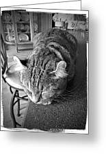 Bad Cat Greeting Card by Susan Leggett